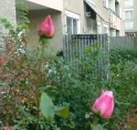 Henriksdalsberget, Nacka: Rosor och uteplatser på innergården