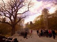 Eken vid Fredriksberg på Kvarnholmen, Nacka med natur- och kulturvandrare