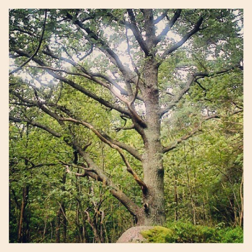 Över 1000 arter är beroende av eken. I Trolldalen på Henriksdalsberget finns många unga ekar som är runt 100 år gamla.