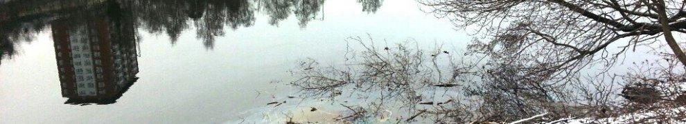 Svindersviken, Nacka: Oljeutsläpp kring bäverbo