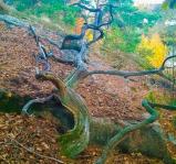 Gamla rötter letar sig fram i skogen Trolldalen mellan Henriksdalsberget, Finnboda och Svindersviken - Danvikstull