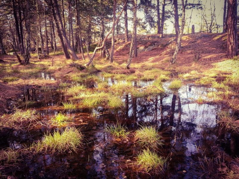 Skogsmyr i skogen Trolldalen mellan Henriksdalsringen, Svindersviken och Finnboda - Danvikstull