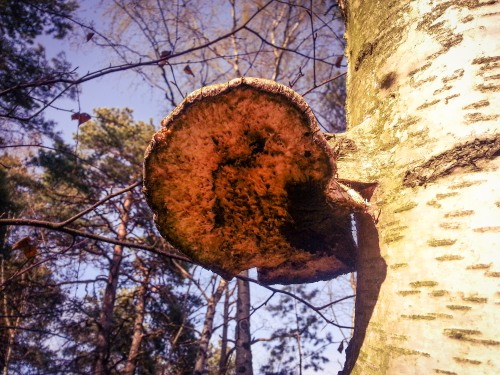 Ticka i skogen Trolldalen i Henriksdal, Nacka