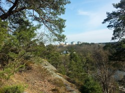 Vy över trätopparna i Trolldalen, Henriksdal i Nacka