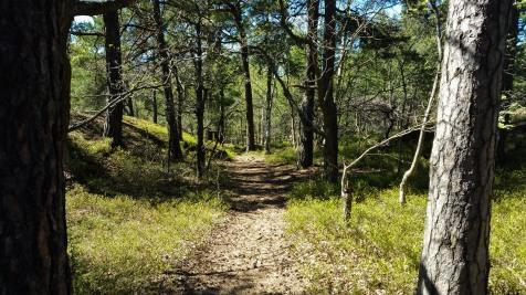 Huvudstigen i skogen Trolldalen på Henriksdalsberget i Nacka