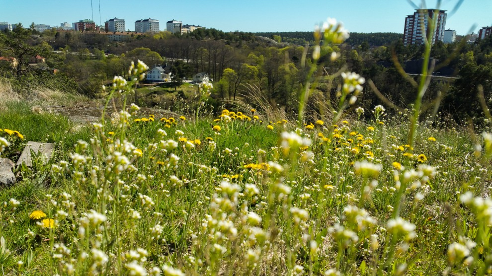 Blommor i Trolldalen på Henriksdalsberget, Nacka