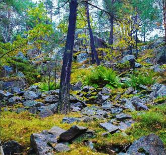 Stenfall, ormbunkar och tallar i skogen Trolldalen mellan Henriksdalsringen, Finnboda och Svindersviken - Danvikstull