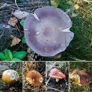 svampar i trolldalen