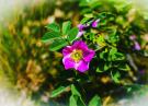 Bild 1 (Fotograf: colors_and_pixels)