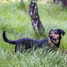 Många grannar rastar hundarna i Trolldalen (bild: colors_and_pixels)