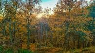 Ekar och tallar under hösten i skogen Trolldalen i Nacka
