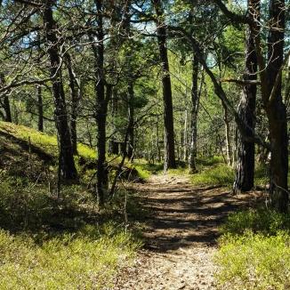 Trollstigen i skogen Trolldalen mellan Henriksdalsringen, Finnboda och Svindersviken - Danvikstull