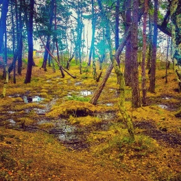Träsket i Trolldalen närmare Gäddviken.