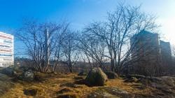 Bageriberget i Saltsjöqvarn: Danviksklippan bakom träd