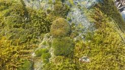Bageriberget i Saltsjöqvarn: Mossor och lav