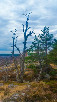 Utsikt från Trolldalen mot Alphyddan (vår)