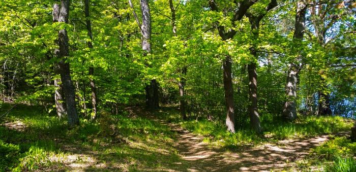 Skogen Fredriksberg på Kvarnholmen i Nacka