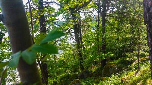 En brant med ormbunkar i skogen Kvarnholmen