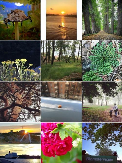 Bidrag till naturfototävling på Västra Sicklaön 2017