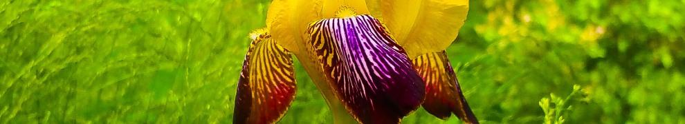 En iris i Engelska parken mellan Vilans skola och Danvikshem
