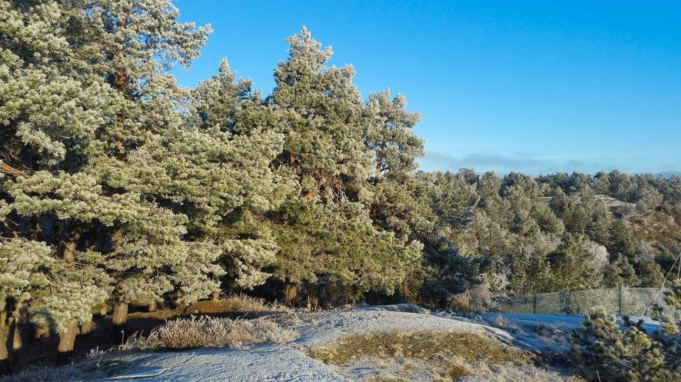 Sockriga tallar i nyckelbiotopen Trolldalen på Henriksdalsberget
