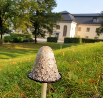 Danviks hospital med sin barockpark